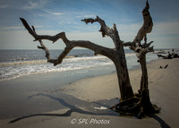 Surreal Tree on Driftwood Beach